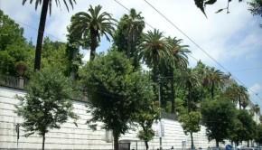 orto-botanico-di-napoli (2)
